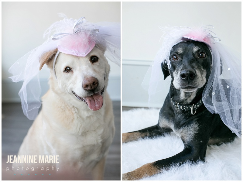 dogs, dog engagement session, dog owners, dog lovers, pets, Minnesota engagement photographer